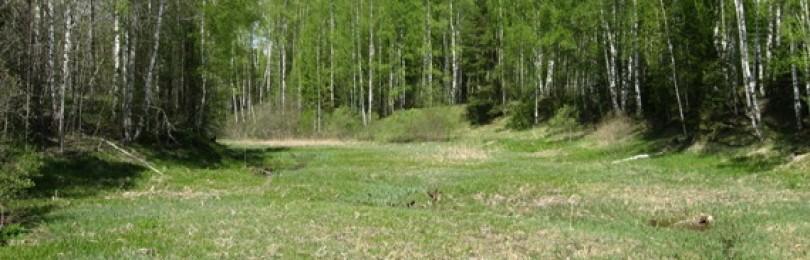 Реки, озера и пруды — интересные места для поиска монет